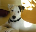 Hund Sammy - Sicherheitsbeautragter